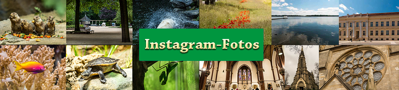 Meine Instagram-Beiträge aus dem November 2016