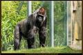 03_ZoologGartenBerlin_IMG_1106_k