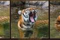 11_ZoologGartenBerlin_IMG_1241_k