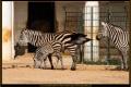 14_ZoologGartenBerlin_IMG_1389_k