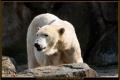 18_ZoologGartenBerlin_IMG_1486_k