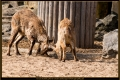20_ZoologGartenBerlin_IMG_1508_k