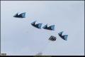 13_TempelhoferFeld_2015-09__B5D1182_K