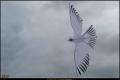 27_TempelhoferFeld_2015-09__B5D1310_K