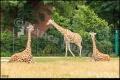 Tierpark Berlin (Bezirk Lichtenberg)
